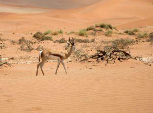 Buscar un coche de alquiler en Namibia