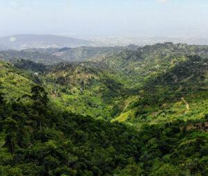 Buscar un coche de alquiler en Jamaica