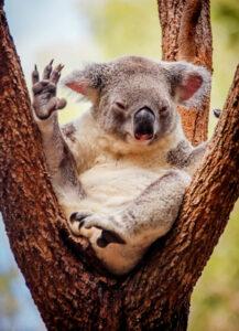 Visita las atracciones de Australia con un toque interesante